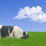 img_biogas
